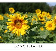 Long Island Poster by Joanne Henig Photography