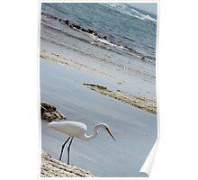 A Waterbird enjoying the serenity at Warrnambool. Poster