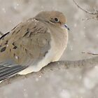 Dove In Winter by lorilee