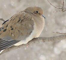 Dove In Winter by lorilee