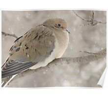 Dove In Winter Poster