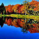 Autumn Foliage at St. James by Brian Gaynor