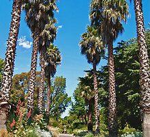 Avenue, Geelong Botanic Gardens by Leanne Nelson