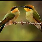 Rainbow Bee-Eaters by Anna Ryan
