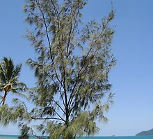 She Oak Tree at South Mission Beach by STHogan