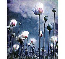 Shine Through Photographic Print