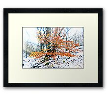Russet foliage against snow Framed Print