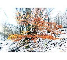 Russet foliage against snow Photographic Print
