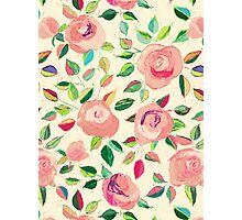 Pastel Roses in Blush Pink and Cream Photographic Print