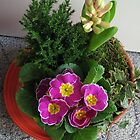 Primrose, Budding Hyacinth and a Little Tree by BlueMoonRose