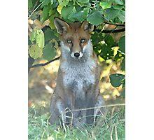 I spy a fox Photographic Print