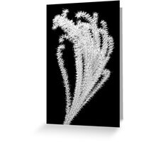 feather reed grass Greeting Card