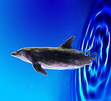Dolphin Zoom by 2HivelysArt