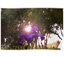 Shining Flower Poster
