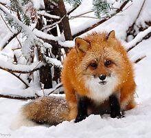 Foxy Face by Nancy Barrett