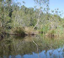 Valley of the Mist Wetlands, Macksville, NSW, Australia by Adrian Paul