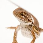 Bearded Dragon by Ashley Crombet-Beolens