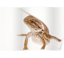 Bearded Dragon Poster