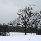 A Winter Silhouette by Geno Rugh