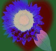FLOWER OF LOVE by Norma-jean Morrison