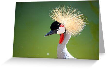 Bird in Al Ain Zoo, UAE by sylvianik