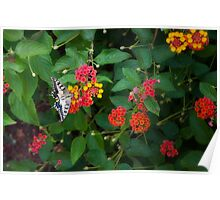 Flower by flower Poster