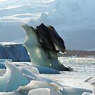 ice bird by lukasdf