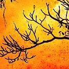 Burning branch by Angela King-Jones