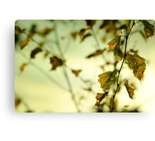 Autumn Leaves.... Canvas Print
