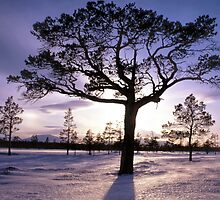 Tree in sunshine by Ingvar Bjork Photography