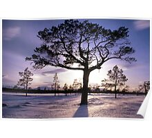 Tree in sunshine Poster