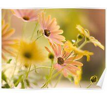 Summer Flowers.... Poster