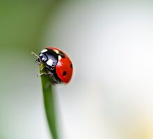 Ladybird... by David  Baker