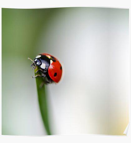 Ladybird... Poster
