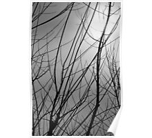 Winter tree limbs against gray sky Poster