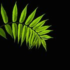 Sumac Leaf on Black by Debbie Pinard