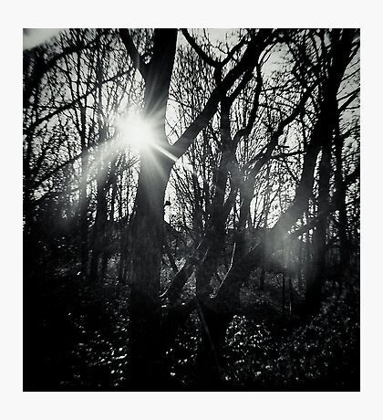 Out of the Dark Photographic Print