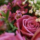Beautiful Pink Flowers by SunshineSong