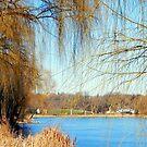 Beautiful winter day © by Dawn M. Becker