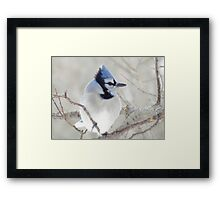 Blue Jay Profile Framed Print