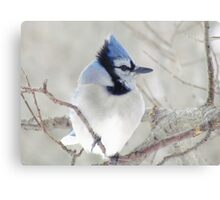 Blue Jay Profile Canvas Print