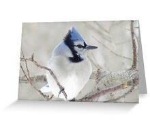Blue Jay Profile Greeting Card
