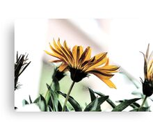 Just Sincerity Canvas Print