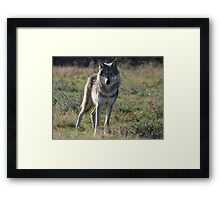 NORTH AMERICAN TIMBER WOLF Framed Print