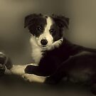 Ok - I've posed for your picture,  now can I play with my duck? by hampshirelady