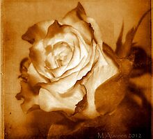 Just One Rose by marke auvinen