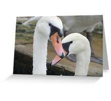 Swans - St Ives, Cambridgeshire Greeting Card