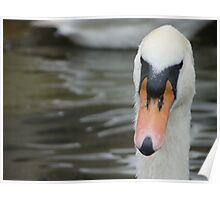 Swan - St Ives, Cambridgeshire Poster
