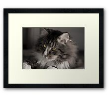 Cute cat with amazing eyes Framed Print
