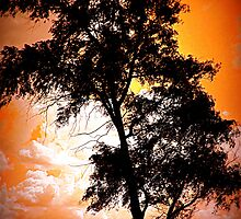 Sunset Tree by MissDawnM